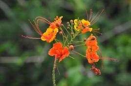 dsc 7419.jpg Fleurs dans les jardins du domaine de l'anse Caritan