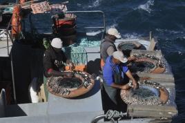 dsc 2119.jpg Préparation des lignes dans le port de pêche de Sagres