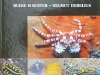 p1010134.jpg World atlas of marine fauna par R. Kuiter & H.Debellius