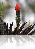 dsc 4741.jpg Fleurs sur  la route du lodge Septimo paraiso