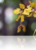 dsc 6185.jpg Orchidées au Guango lodge