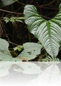 dsc 4346.jpg Plante