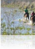 dsc 8596.jpg Cavaliers dans le Charco de la Boca à El Rocio