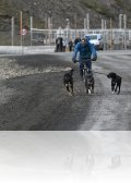 dsc 0402.jpg On promène ses chiens à Longyearbyen