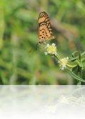 dsc 1948.jpg Papillon  à Abédé