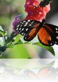 dsc 0652.jpg Papillon à Alajuela