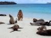 epv 0195.jpg Lions de mer sur Isla Hispanolia, Galapagos, Equateur